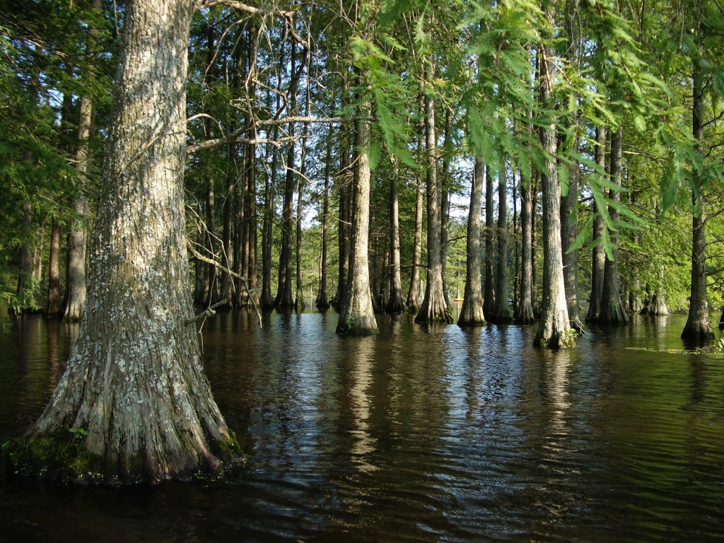 enviva bottomland stewardship program